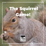 In this game you will use your sense of smell to tell which items are food and which aren't. Play with friends or family and see who would make the best ground squirrel!