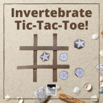 Learn some fun facts about sand dollars and create your own Tic-Tac-Toe set with this activity.