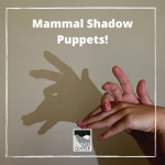 Create a shadow puppet show with the entire family ,and learn about four animals found in California with this activity.