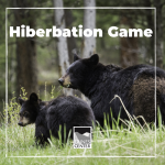 Learn about bears, hibernation, and learn a fun game to play with your family friends.