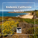 Learn about a invertebrate species that are only found in California with this activity