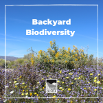 How diverse is your backyard? Learn all about biodiversity and discover just how much biodiversity can be seen in your own yard with this fun, outdoor activity!