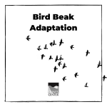 Have you noticed all the different types of beaks birds have? Find out which shape works best for grabbing food with this activity!