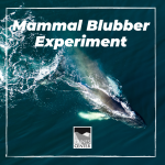 Learn about how marine mammals stay warm in the ocean with this fun experiment!
