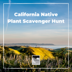 Make a hike more interesting with this scavenger hunt. Take it with you while hiking through the foothills of the Central Coast!