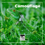 Can you spot hidden animals when they are using camouflage? Try your luck in Spot the Animal today!
