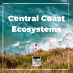 Get ready to learn about all the different kinds of ecosystems on the Central Coast in this activity! From the pine forests, to the sand dunes, we will learn all about ecosystems in this fun activity!