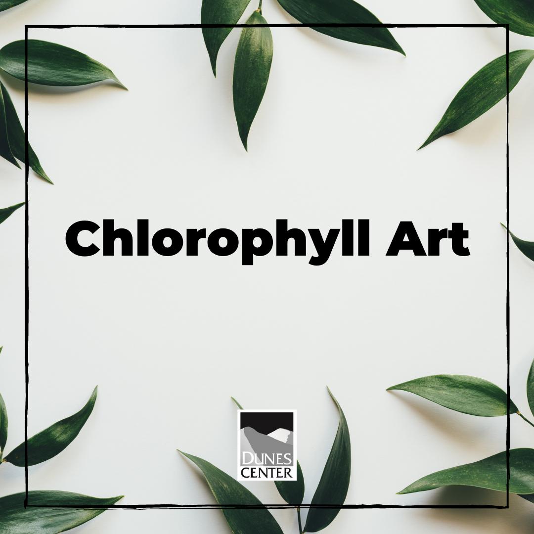 Do you know why plants are green? Find out in our chlorophyll art activity, were you use the chlorophyll from plants to make a painting!