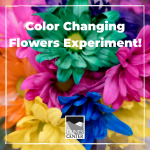Experiment with capillary systems in flowers and learn about how root systems work with this activity!