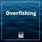 Teach your kids about overfishing with this interactive game! The entire family can join in!