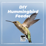 Check out the worksheet in our bio to learn more about hummingbirds and how you can make your very own hummingbird feeder using common household objects!