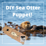 Create your own super cute Sea Otter Puppet and learn some fun facts too!