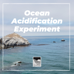 Learn about ocean acidification and conduct an experiment to see how ocean acidification affects seashells with this activity.