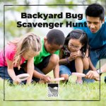 Go on the hunt for some common bugs found in California with today's activity!