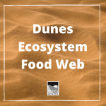 How are owls, snakes, and kangaroo rats all related? Find out in this activity! You will learn about food webs, species, and dunes ecosystems all from the comfort of your home!