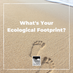 Find out what your ecological footprint is with this activity, and brainstorm ways to help reduce your impact on the environment!