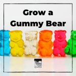 Learn about osmosis in this activity and grow your own gummy bears! In this 24-hour long experiment, watch as gummy bears fill up with water before your eyes!