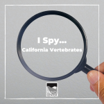 This activity will test your knowledge of vertebrates and invertebrates, while also testing you're your skills of observation and perception! Search for all of the California vertebrates in this I Spy activity!