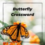 Learn about some common butterflies and then enjoy a fun butterfly themed crossword.
