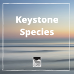 Learn what a keystone species is and why they are so important in this fun and informational activity.