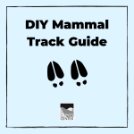 Can you identify mammal tracks on a hike? With this activity, learn about four very common mammal tracks and make your own DIY guide to bring with you on a hike or hang up as art!
