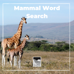 Keep your eyes peeled during this tricky word search with 24 different mammals hidden in it!