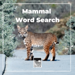 This fun word search is a perfect game for the entire family. Try and find all 8 words in this activity and have the opportunity to draw your favorite mammal!