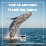 Study different types of marine mammals and then play a fun mammal card matching game!