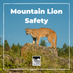 Have you ever come across a mountain lion? In this activity, learn all about the mysterious mountain lion and what to do if you come across one on a hike!