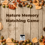 Train your brain with this fun nature memory matching game