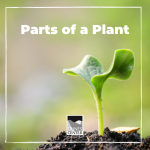 Did you know that there are around 400,000 species of plants on Earth? Learn about the different parts of plants and how they function in this activity!
