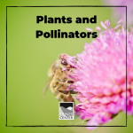Pollination is a very important step in the reproduction of plants and can't be done without insects like bees and butterflies. Learn about the relationship between plants and pollinators in this fun and yummy activity!
