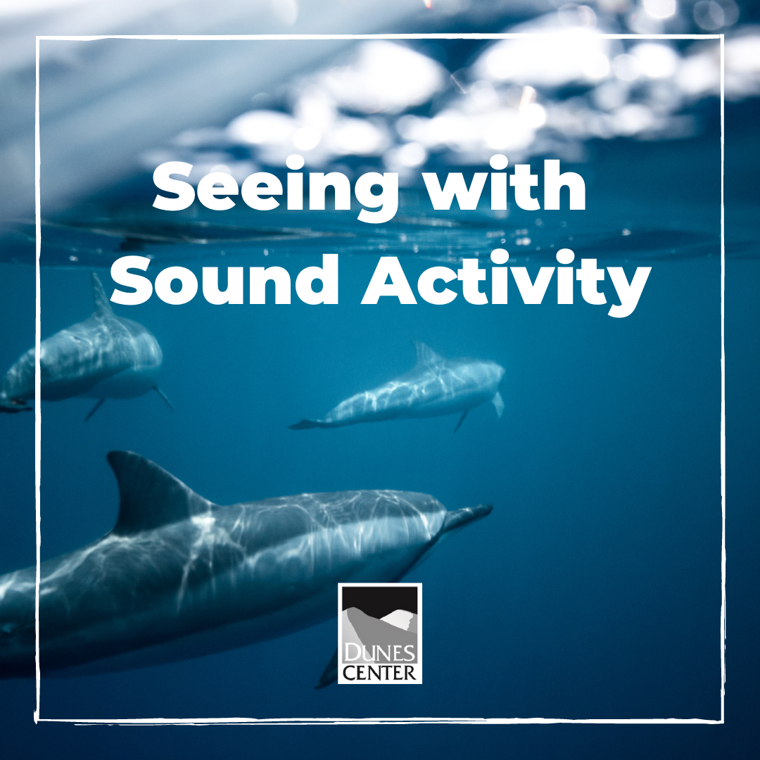 In today's activity, explore why dolphins are considered mammals and experience how they use echolocation to find their food!