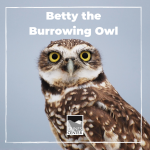If you love silly sentences and want to learn more about Betty, the Burrowing owl's exciting day, this activity is just for you. Fill in the blank areas with adjectives, verbs, and nouns to describe the CRAZY day Betty has had.