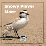 Have you ever seen a Snowy Plover? Learn more about these cute shorebirds and attempt to help the plover find its food through a maze in this activity!