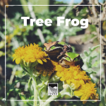 Learn about the life cycle of the tree frog with this fun activity!