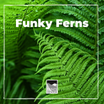 Learn all about how diverse ferns are in this botany lesson!